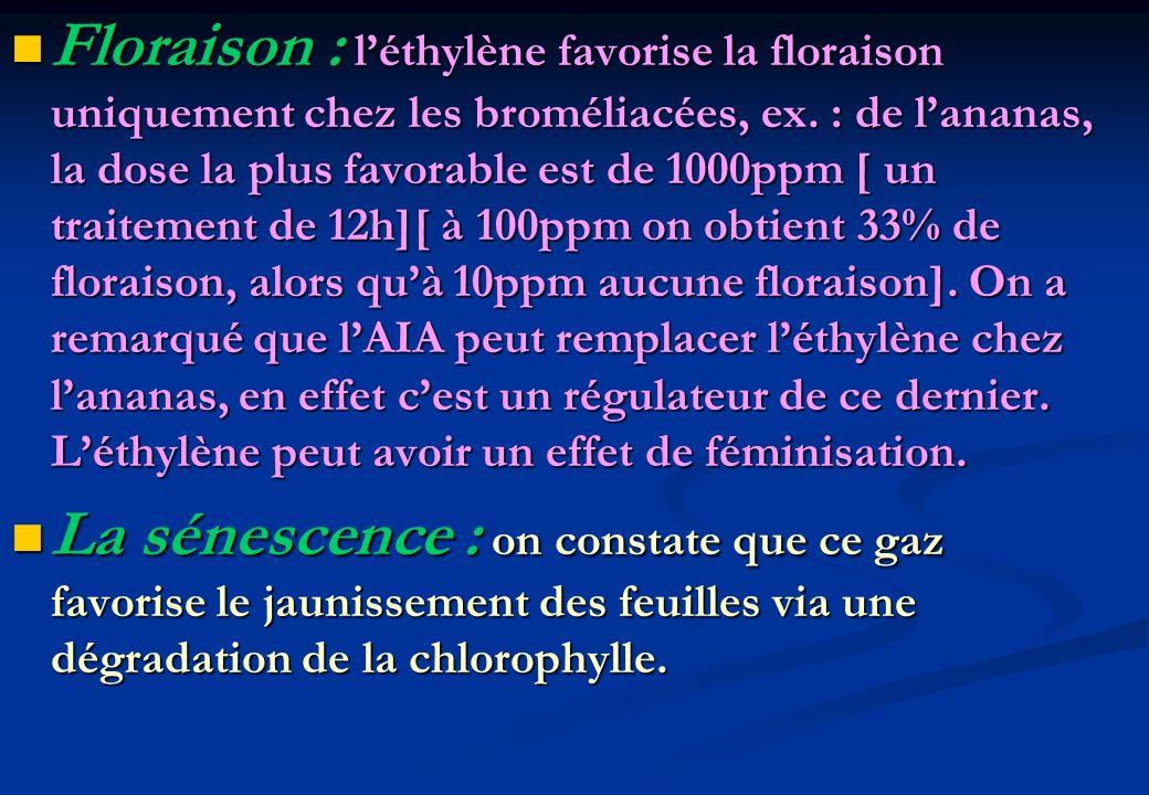 Floraison : l'éthylène favorise la floraison uniquement chez les broméliacées, ex. : de l'ananas, la dose la plus favorable est de 1000ppm [ un traitement de 12h][ à 100ppm on obtient 33% de floraison, alors qu'à 10ppm aucune floraison]. On a remarqué que l'AIA peut remplacer l'éthylène chez l'ananas, en effet c'est un régulateur de ce dernier. L'éthylène peut avoir un effet de féminisation.